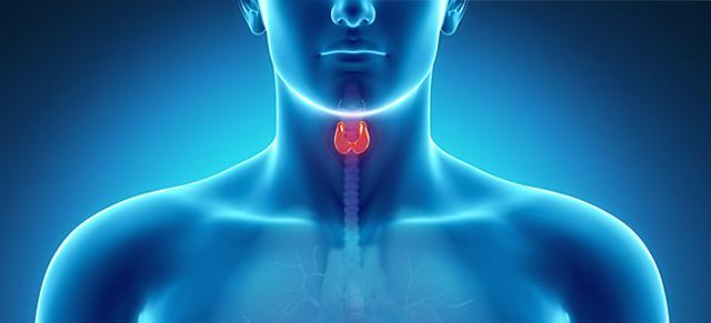 Las glándulas suprarrenales - Quirúrgica